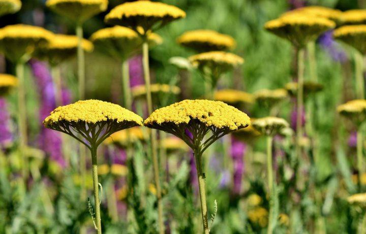 fleurs ouvrent ses pétales tout l'été